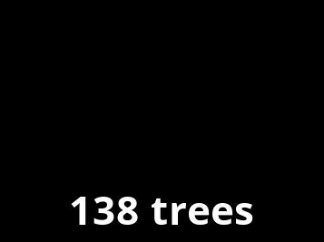 Wir pflanzen Bäume mit Ecologi